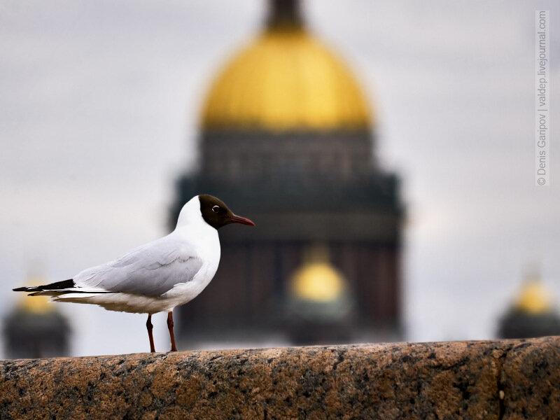 Петербург весной картинки