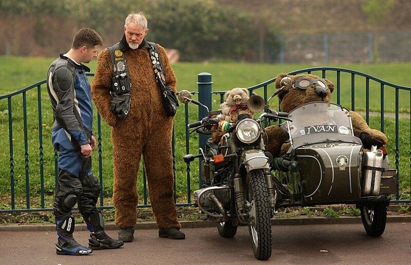 медведь за рулем