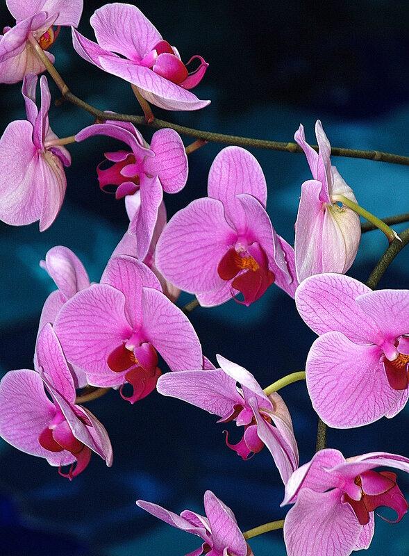 """Схема вышивки  """"Орхидеи """": таблица цветов."""