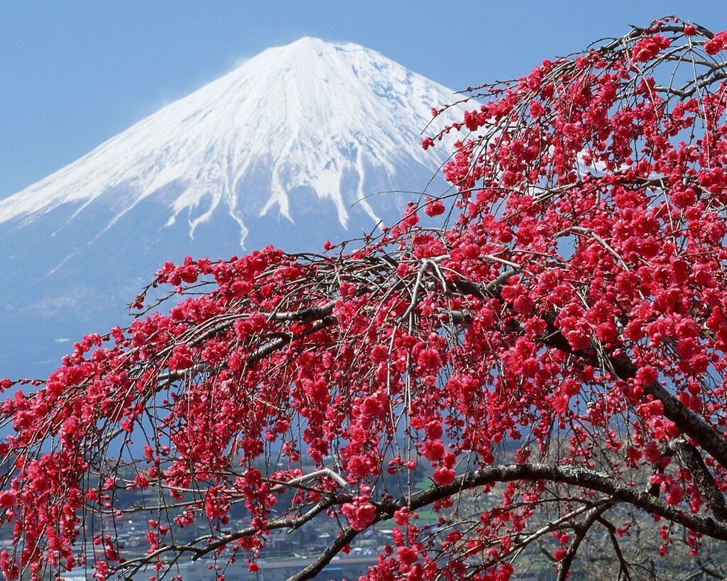 Red-Flowers-Mountains-Tree-2048x2560.jpg