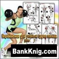 Упражнения для разных групп мышц