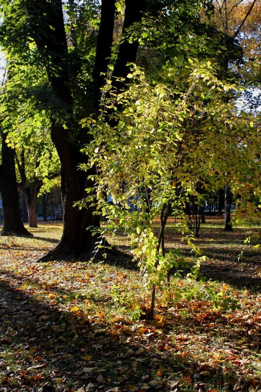 Осенний Киев