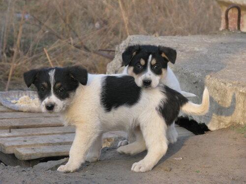 Злые пёсы