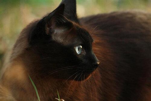 DaryaDarya — «Кот-кот» на Яндекс.Фотках