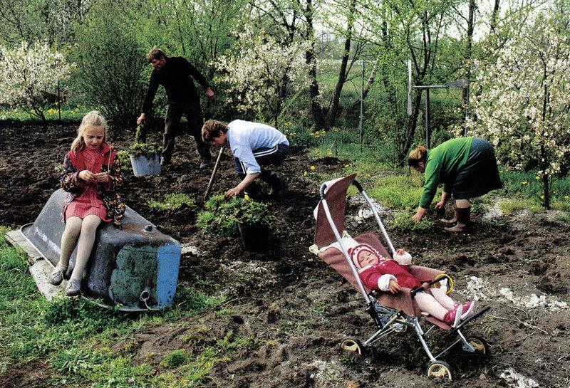 осенние работы в огороде картинки