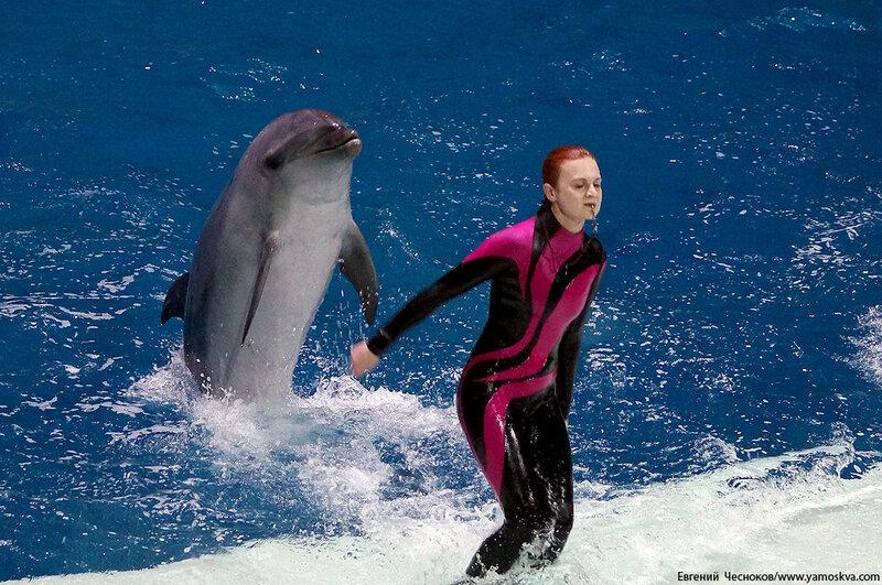 Лето. ВДНХ. Москвариум. Дельфин. 14.08.15.03..jpg