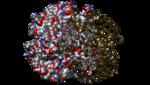 1C7D-DEOXY RHB1.2 (RECOMBINANT HEMOGLOBIN)-7.png