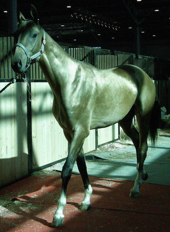 Лошади на выставке Иппосфера 2009