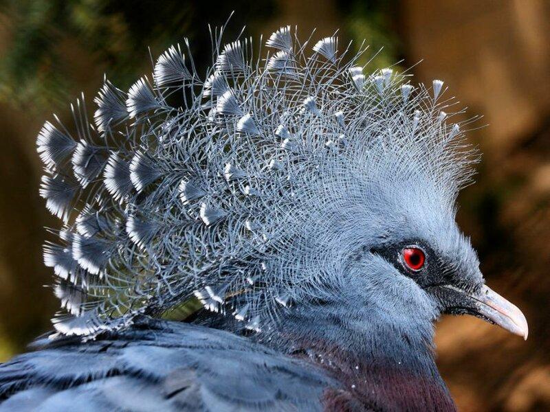 птица с белым хохолком - b Нажмите чтобы открыть