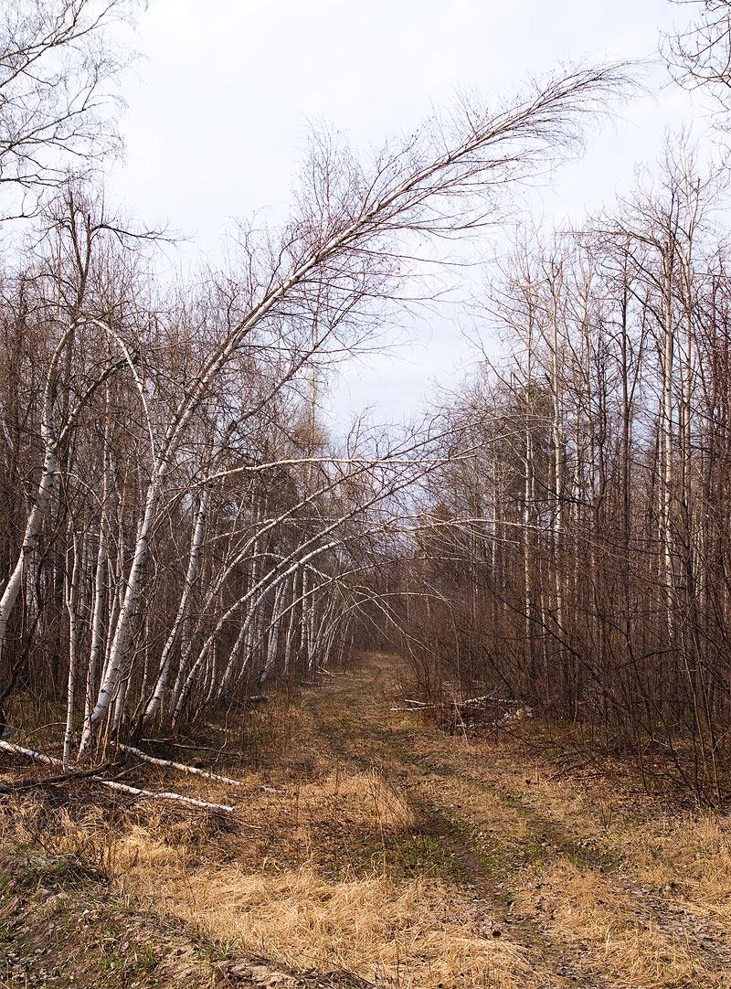 Сызранские леса