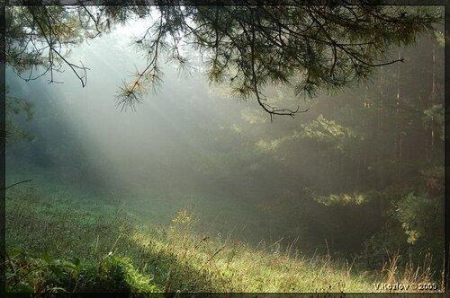 Утро в монастырском лесу