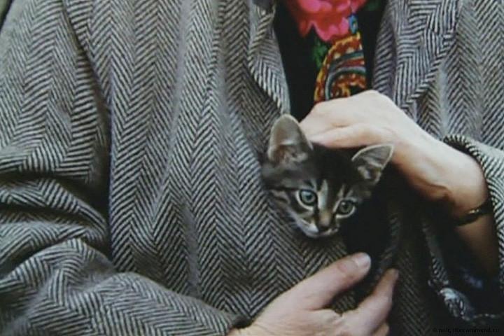 кошка в фильме Котенок