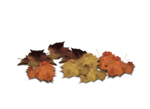 png_leaves_by_moonglowlilly-d5n4cuj.png