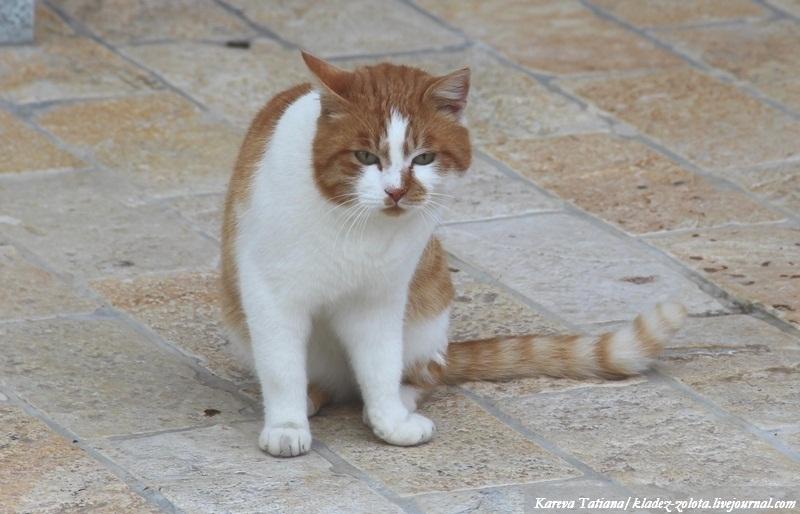 Итальянские кошечки и не только
