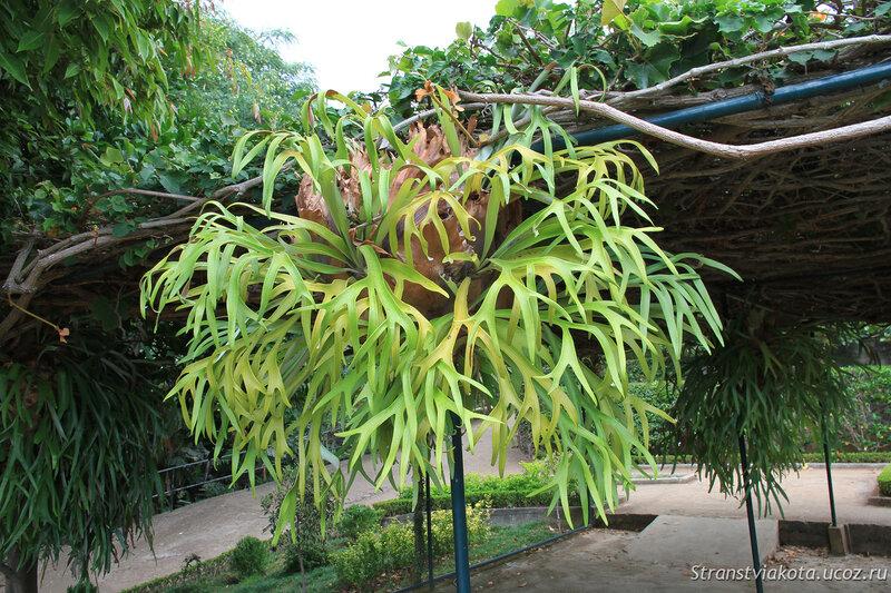 Мадейра, Фуншал, Ботанический сад