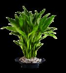 DBK PLANTS 050.png