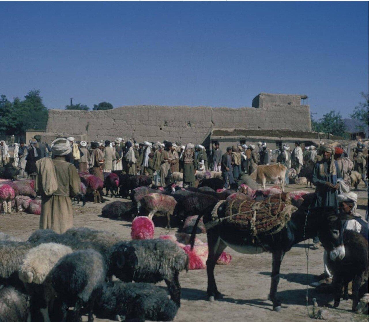 Рынок животных в Кабуле