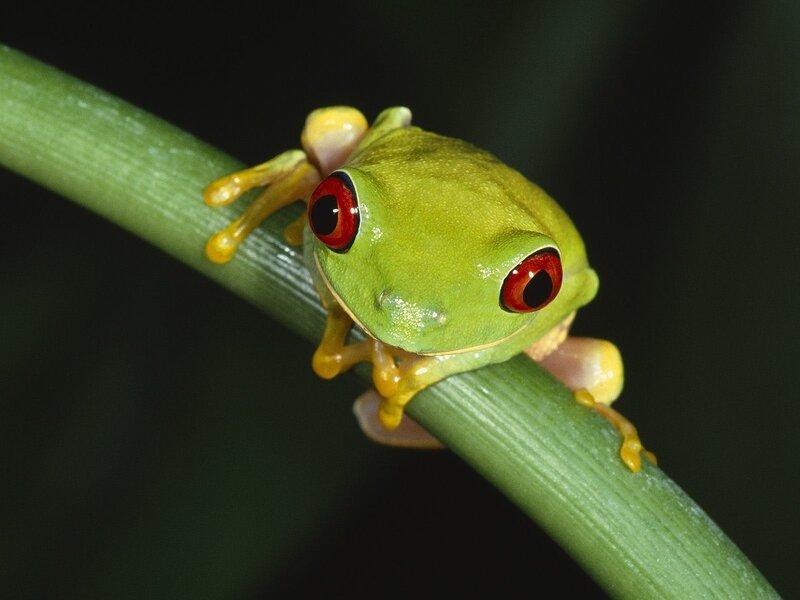 Не царевна - а красивая лягушечка