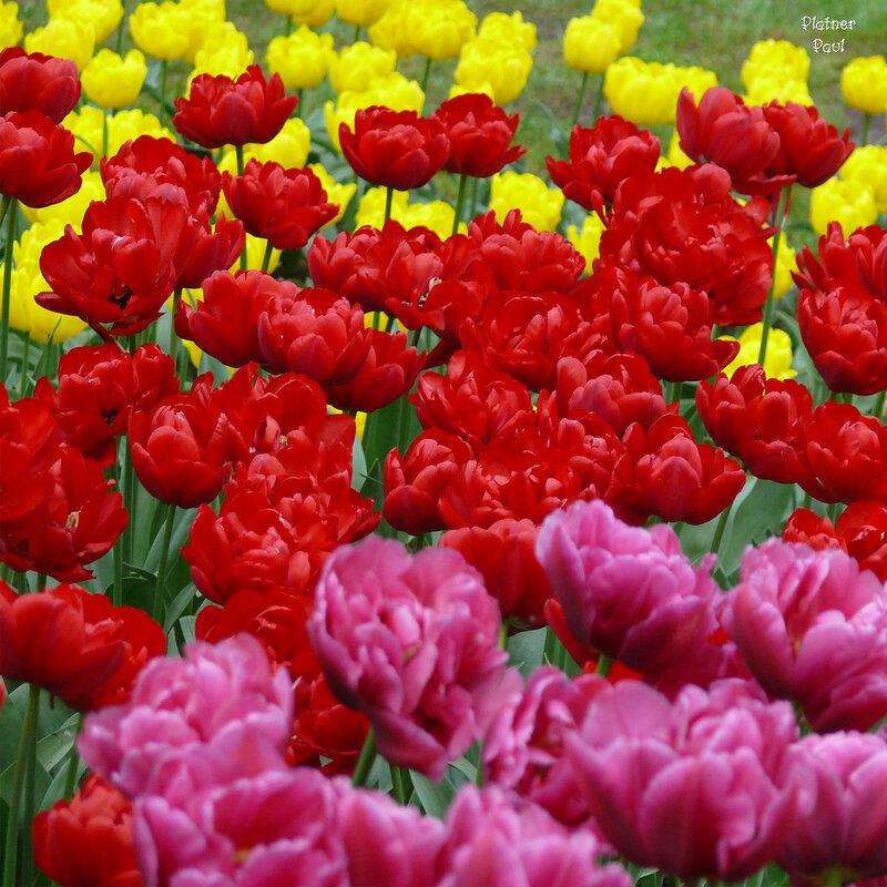 как в радуге - перелив цветов...