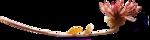 ldavi-fallingleavesautumntea-driedflower8.png