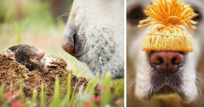Любопытство пса в красочных фотографиях!