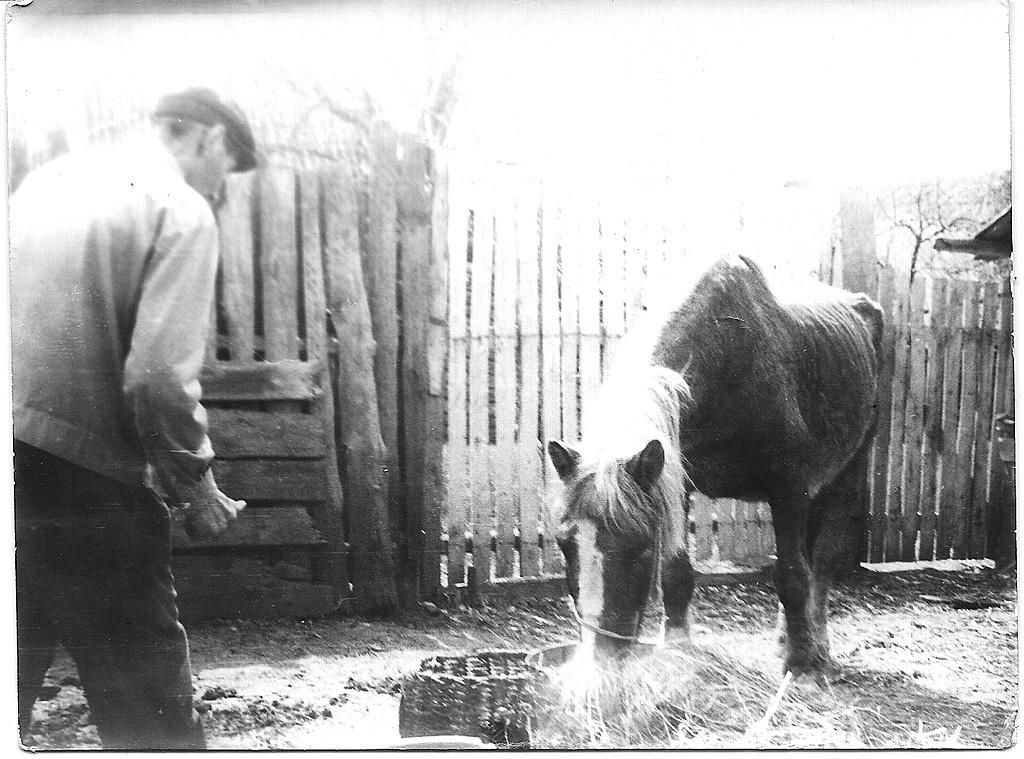 8. В блоге можете найти отчеты о прогулке на лошадях по зимнему лесу, о походе в горы Башкирии верхом. Я писал, что кататься не умел, пока в прошлом году не поехал в конный клуб. Это не совсем верно - впервые я сел на лошадь в 6 лет... :)