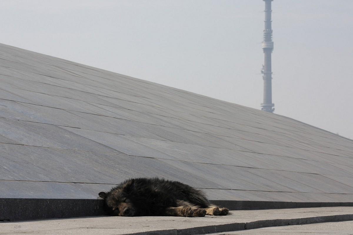 Песик у подножья обелиска «Покорителям космоса»
