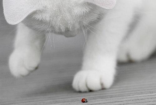 JeeBee — «и кто это у нас такой ползет?» на Яндекс.Фотках