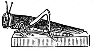 Jewish Symbols - Sculptured Locust