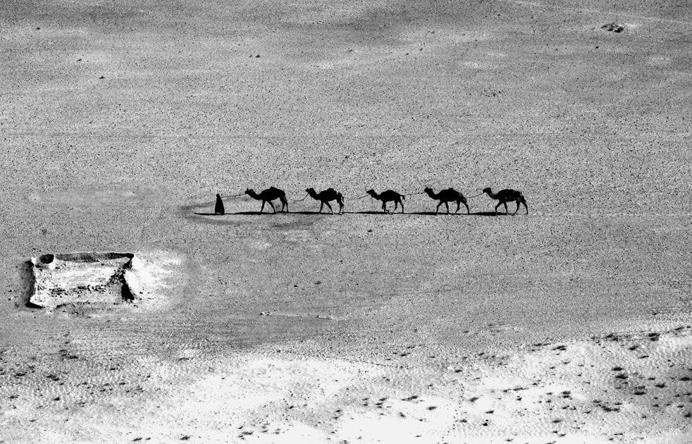18. Афганец ведет верблюдов через пустыню. (AP / Kevin Frayer)