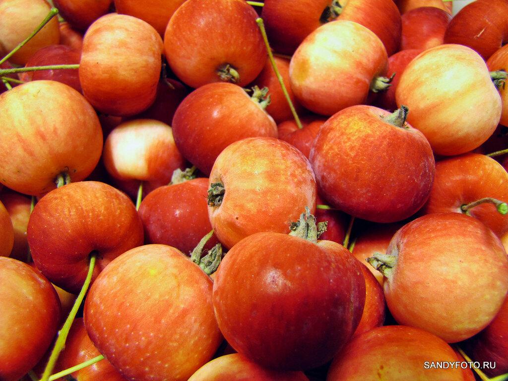 Фотосерия ягоды — яблоки и слива 2015