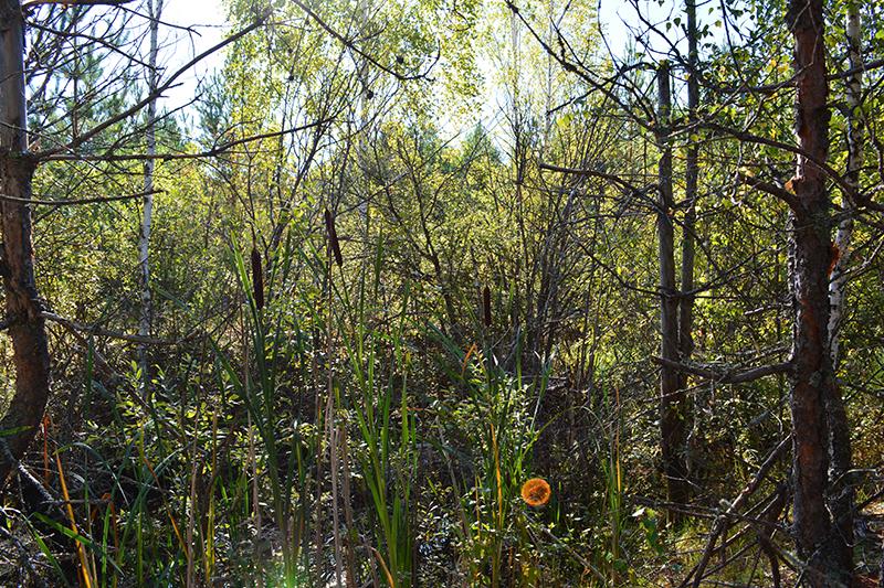 осень 15 болото