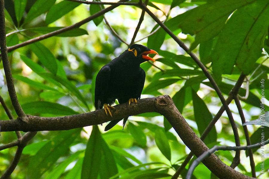 0 c4fa5 5b09cef1 orig Парк птиц Jurong в Сингапуре