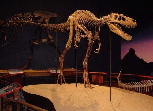 Молодая тиранозавриха Джейн