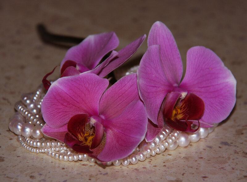 верить официальной орхидеи и лили картинки спорте для