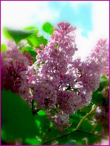 http://img-fotki.yandex.ru/get/3414/l321456987.17/0_2f5a9_6c896b50_L.jpg