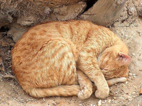 shuslev — «Кошки кайфуют.» на Яндекс.Фотках