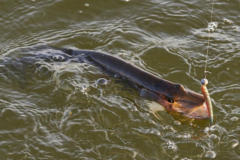 где сегодня клюет рыба и березе