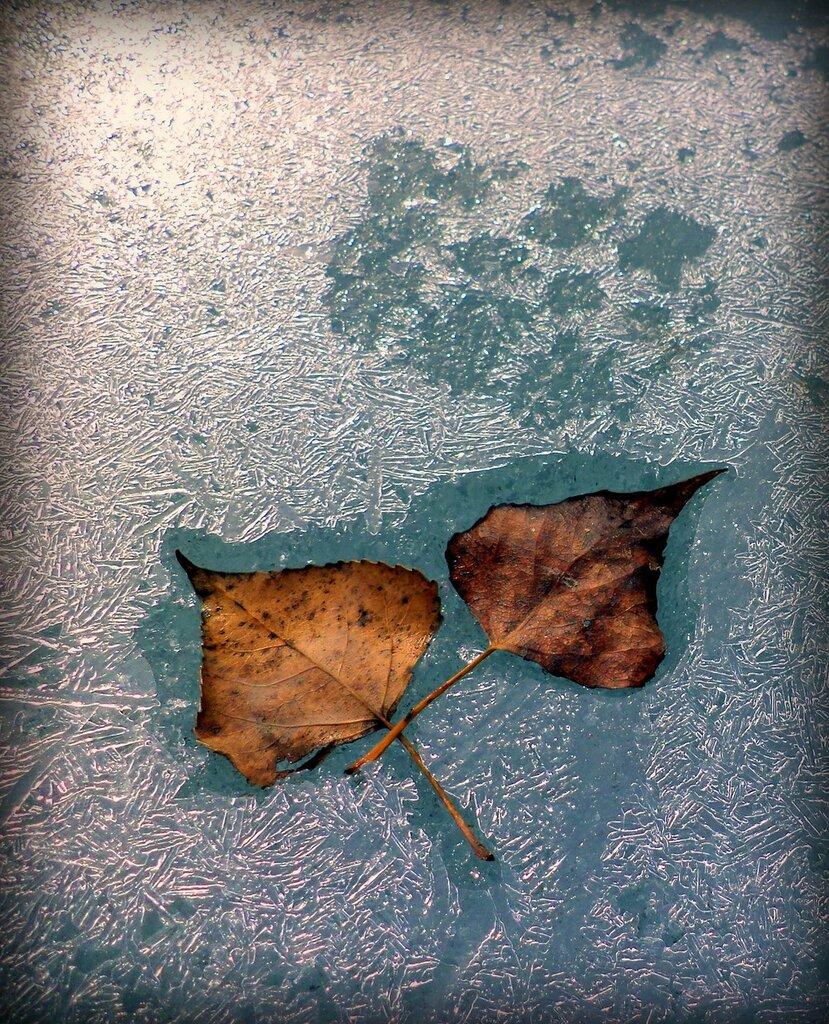 Падали прошлогодние листья...