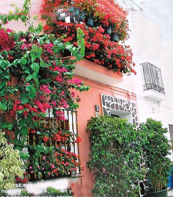 декор балкона горшечными цветами