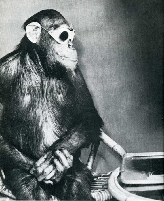 обезьяна и очки