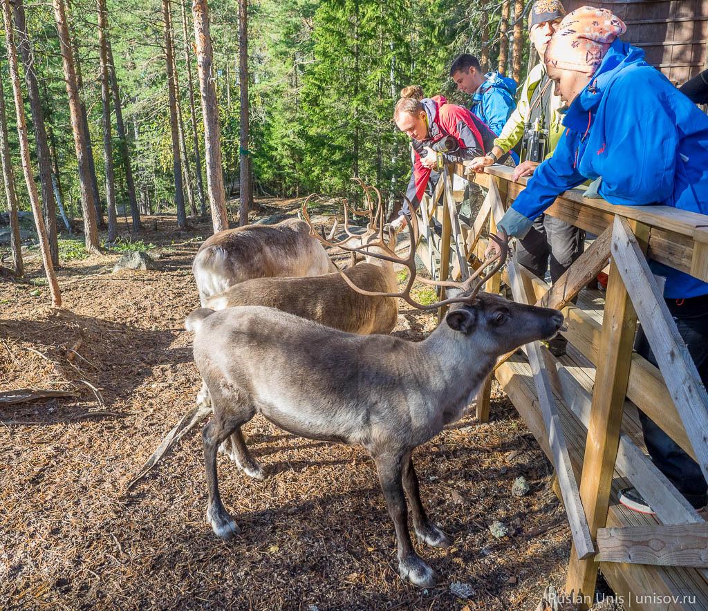 Финляндия коттедж развлечения