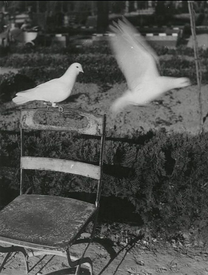 1950. Голуби в Севилье