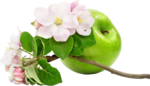 flower (7).png
