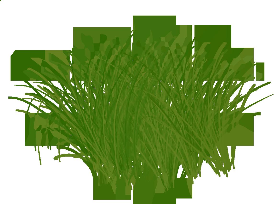 пленку, травы на прозрачном фоне картинка выбор