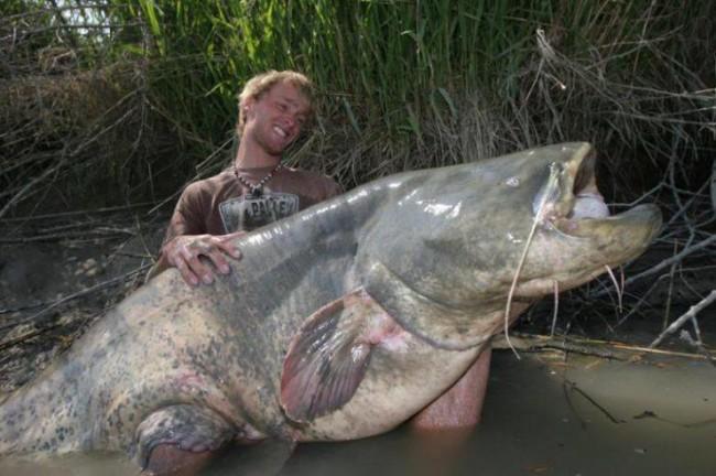 Сом — большая пресноводная бесчешуйчатая рыба. Обитает в озёрах, реках Европейской части России , а