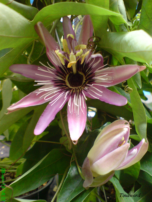 цветок 13.jpg