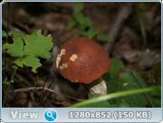 0_d4c22_8df80336_orig.png