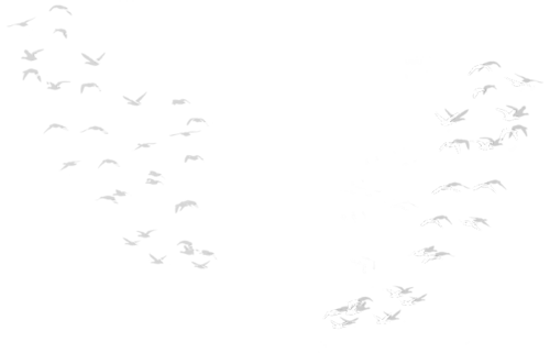 deco-04-beyourself.png,клипарт-птицы.png