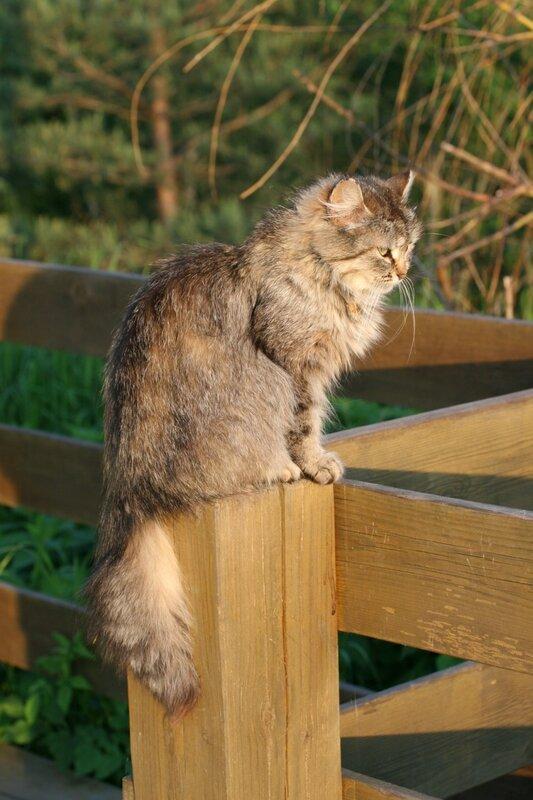 Солнечный котик